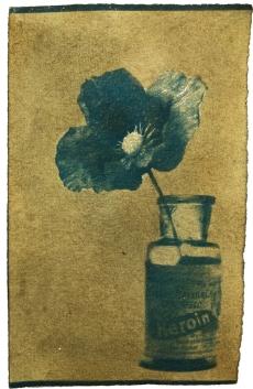 29 / 1956 / Papaver Somniferum / Dawn Cole / Cyanotype and natural dye