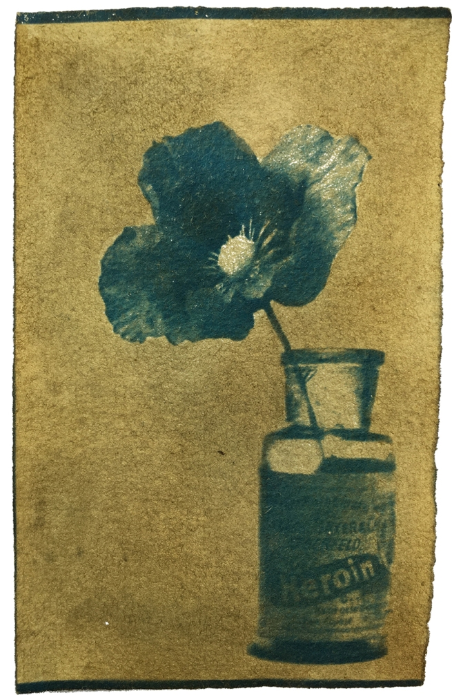 29 / 1956 / Papaver Somniferum / Dawn Cole / Cyanotype and natural dye